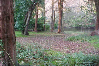 Woodland in Alloway
