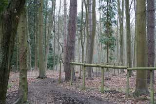 Photo of Maidenhead Thicket