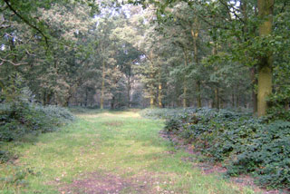 Photo of Epping Forest