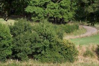 Photo of Banstead Downs