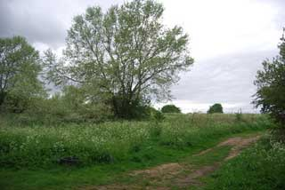 Photo of Mitcham Common